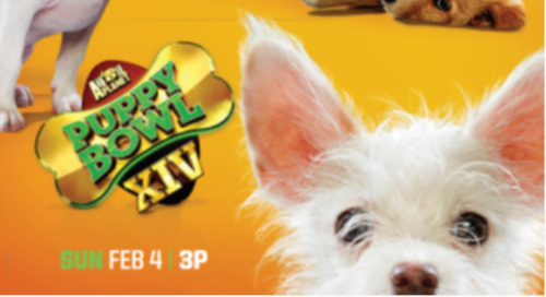Animal Planet: Puppy Bowl XIV [Returning Event]