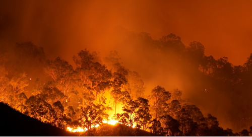 Australia's Bushfire Crisis: the Health Impacts of Bushfire Smoke Exposure