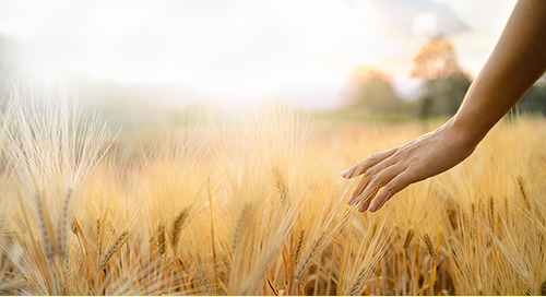 HRSG Helps Agriculture and Agri-Food Canada transform their team structure