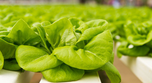 Microgrid Powers Indoor Farm to Deliver Reliable and Sustainable Food