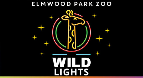 "Setting the Holidays Aglow with ""Wild Lights"" at the Elmwood Zoo"