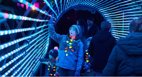 Wild Lights Winter Holiday Festival Opens at Elmwood Park Zoo