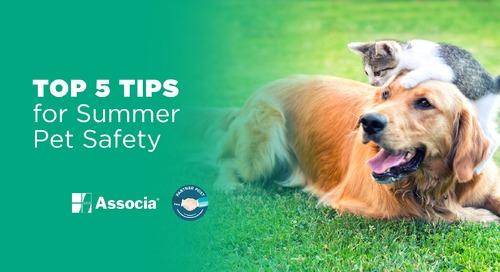 Partner Post: Top 5 Tips for Summer Pet Safety