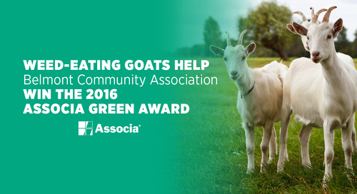 Weed-Eating Goats Help Belmont Community Association Win the 2016 Associa Green Award