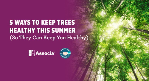 5 Ways to Keep Trees Healthy This Summer (So They Can Keep You Healthy)