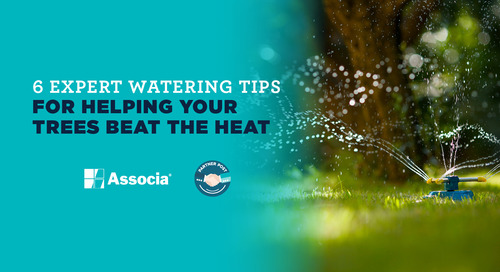 Partner Post: 6 Expert Watering Tips for Helping Your Trees Beat the Heat