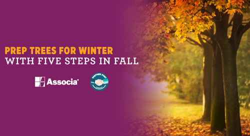 Partner Post: Prep Trees for Winter with Five Steps in Fall