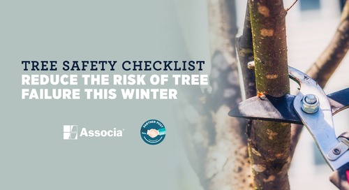 Tree Safety Checklist: Reduce the Risk of Tree Failure this Winter