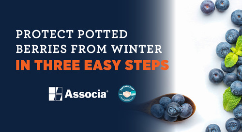 Partner Post: Protect Potted Berries from Winter in Three Easy Steps