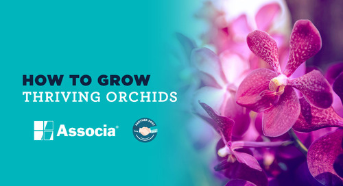 Partner Post: How to Grow Thriving Orchids