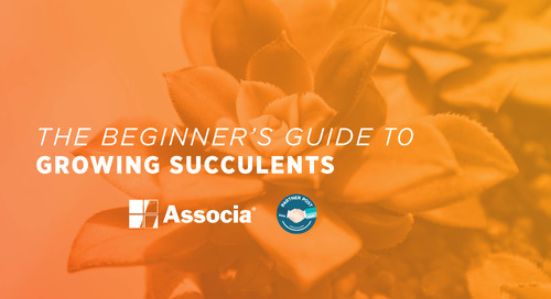 Partner Post: The Beginner's Guide to Growing Succulents