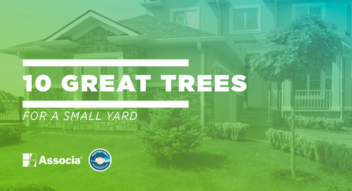 Partner Post: 10 Great Trees for a Small Yard