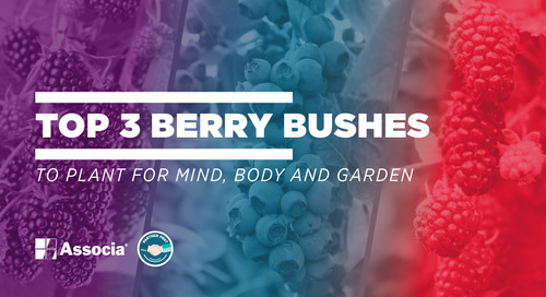 Partner Post: Top 3 Berry Bushes to Plant for Mind, Body and Garden