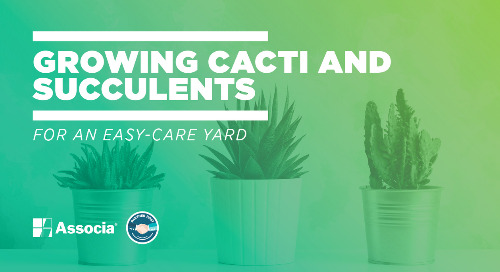 Partner Post: Growing Cacti and Succulents for an Easy-Care Yard