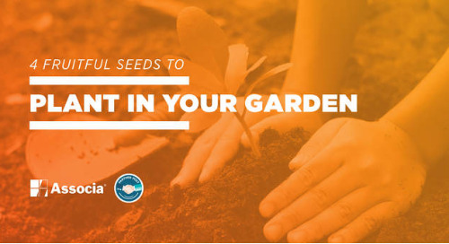 Partner Post: 4 Fruitful Seeds to Plant in Your Garden
