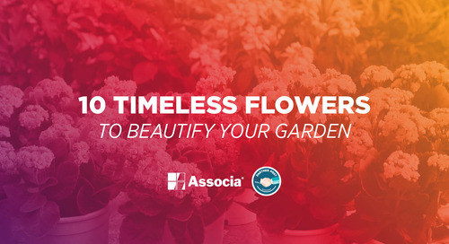 Partner Post: 10 Timeless Flowers to Beautify Your Garden