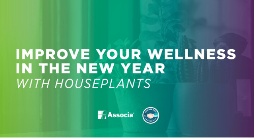 Partner Post: Improve Your Wellness in the New Year with Houseplants