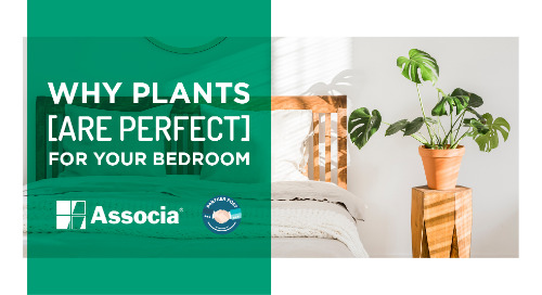Partner Post: Why Plants Are Perfect for Your Bedroom