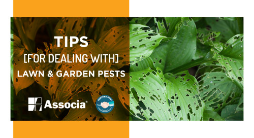 Partner Post: Tips for Dealing with Lawn & Garden Pests
