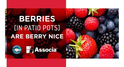 Partner Post: Berries in Patio Pots Are Berry Nice