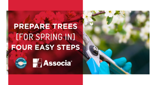 Partner Post: Prepare Trees for Spring in Four Easy Steps