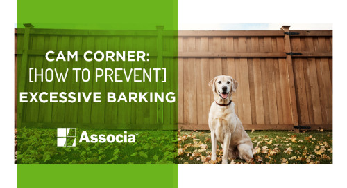 Are You the Pack Leader? How to Prevent Excessive Barking