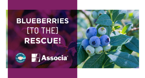 Partner Post: Blueberries to the Rescue!
