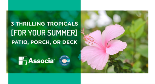 Partner Post: 3 Thrilling Tropicals for Your Summer Patio, Porch, or Deck