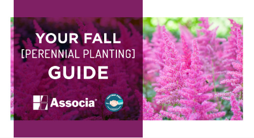 Partner Post: Your Fall Perennial Planting Guide