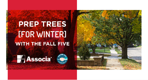 Partner Post: Prep Trees for Winter with the Fall Five