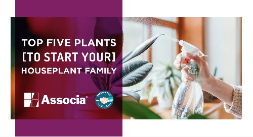 Top Five Plants to Start Your Houseplant Family