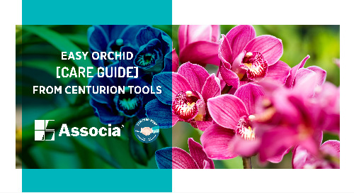 Partner Post: Easy Orchid Care Guide from Centurion Tools