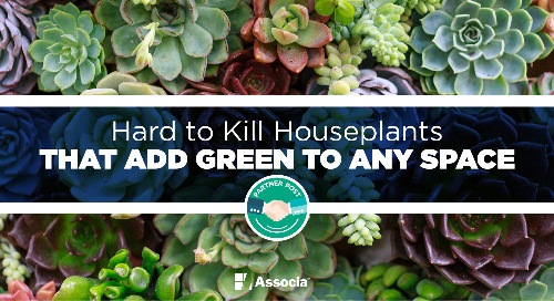 Partner Post: Hard to Kill Houseplants that Add Green to Any Space