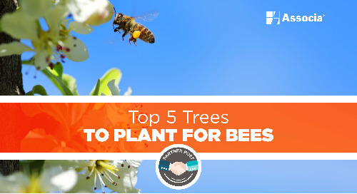 Partner Post: Top 5 Trees to Plant for Bees