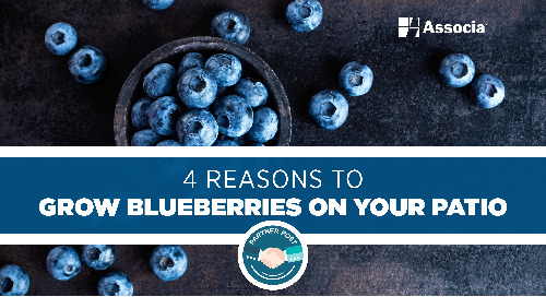 Partner Post: 4 Reasons to Grow Blueberries on Your Patio