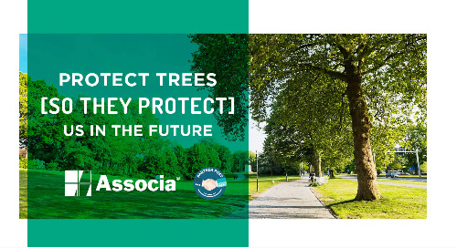 Partner Post: This Earth Day, Protect Trees So They Protect Us in the Future