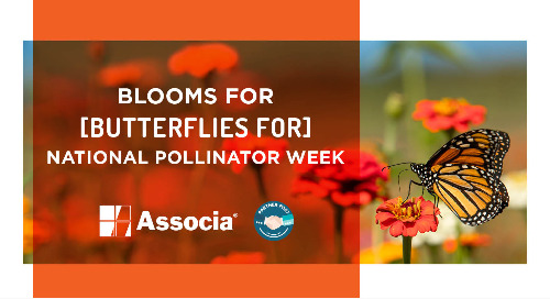 Partner Post: Blooms for Butterflies for National Pollinator Week