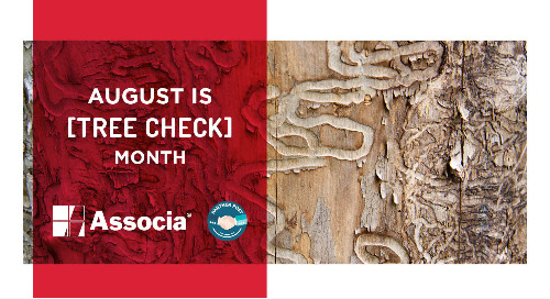 Partner Post: August is Tree Check Month