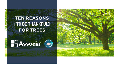 Partner Post: Ten Reasons to be Thankful for Trees