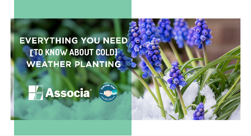 Partner Post: Everything You Need to Know About Cold Weather Planting