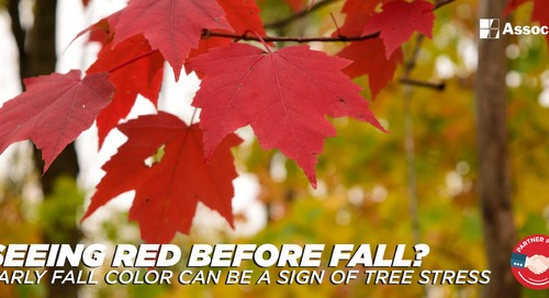 Seeing Red Before Fall? Early Fall Color Can Be a Sign of Tree Stress