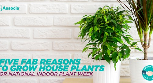 Five Fab Reasons to Grow House Plants for National Indoor Plant Week