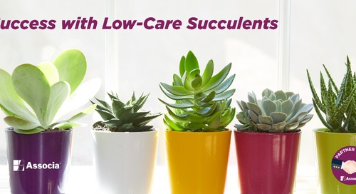 Three Tips for Success with Low-Care Succulents