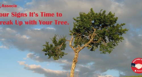 Partner Post: Four Signs It's Time to Break Up with Your Tree