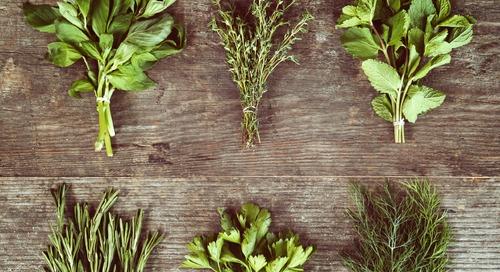 Partner Post: Here's How to Grow Indoor Herbs All Year Long