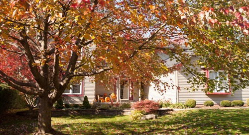 Checklist: 4 Quick Tips to Protect Your Trees from Damage during Fall