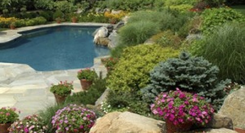 Xeriscape to save water and costs