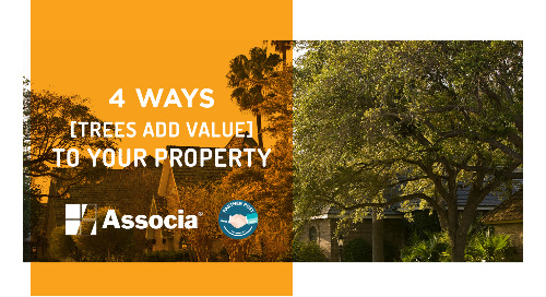 Partner Post: 4 Ways Trees Add Value to Your Property