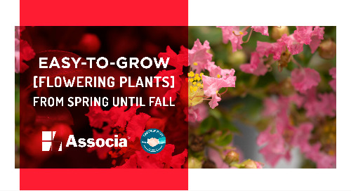 Partner Post: Easy-to-Grow Flowering Plants from Spring Until Fall