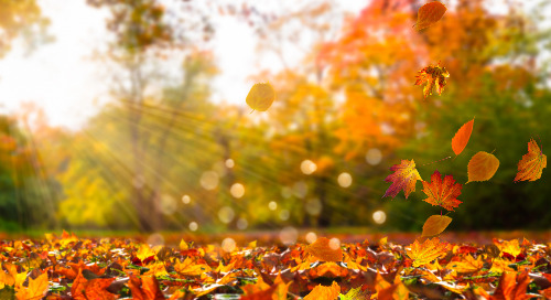 3 creative ideas to connect with your sphere this Fall